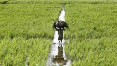 Farmers worried due to incessant rainfall